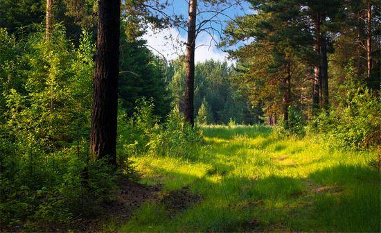 хочу в лес