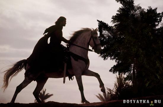 Рыцарь на белом коне