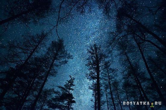 Лес ночь