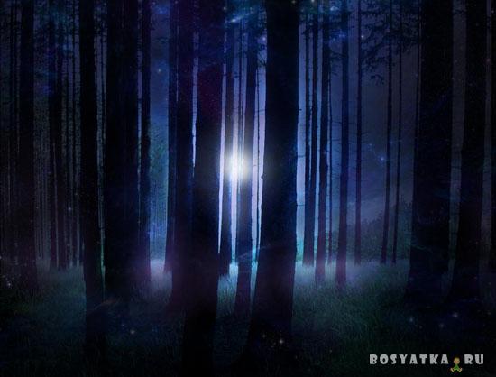 Лес ночной