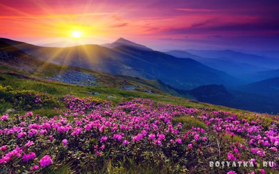 Рассвет на холме
