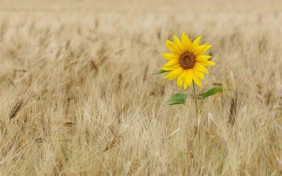 семя любви