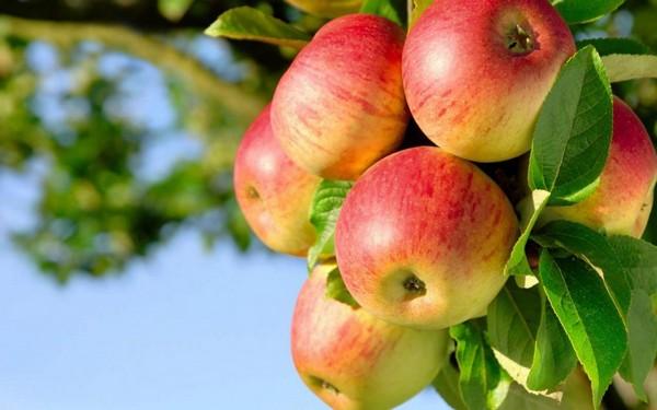 о фруктах